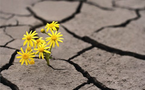 Flower in ground cracks
